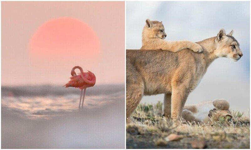 Удивительные кадры с животными в нетронутой среде обитания
