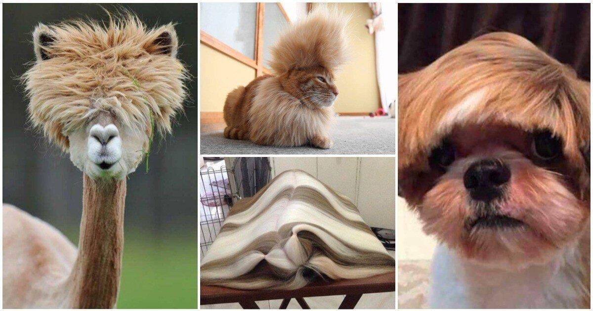 25 животных с такими стильными прическами, которые есть не у каждого человека