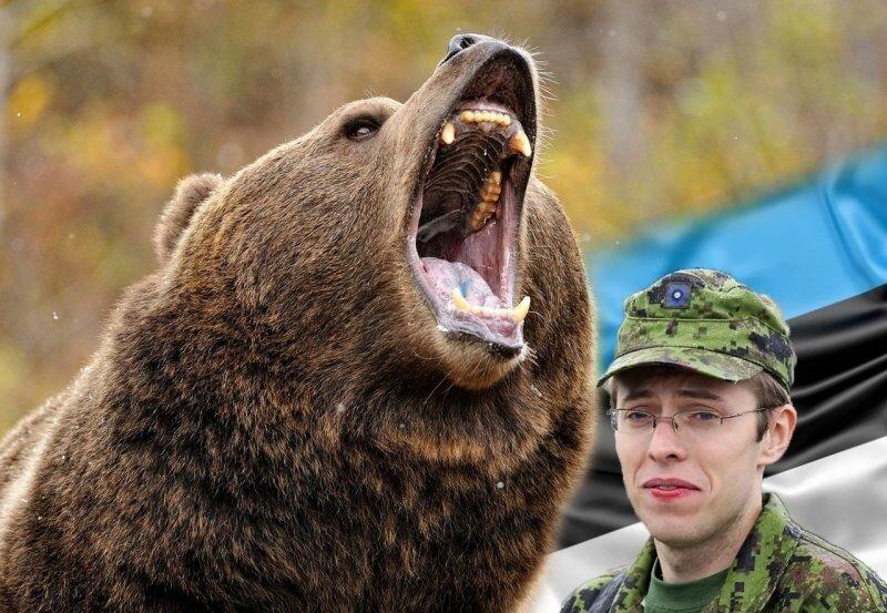 Нашествие медведей в Эстонии. Теперь точно подумают, что это Российская агрессия