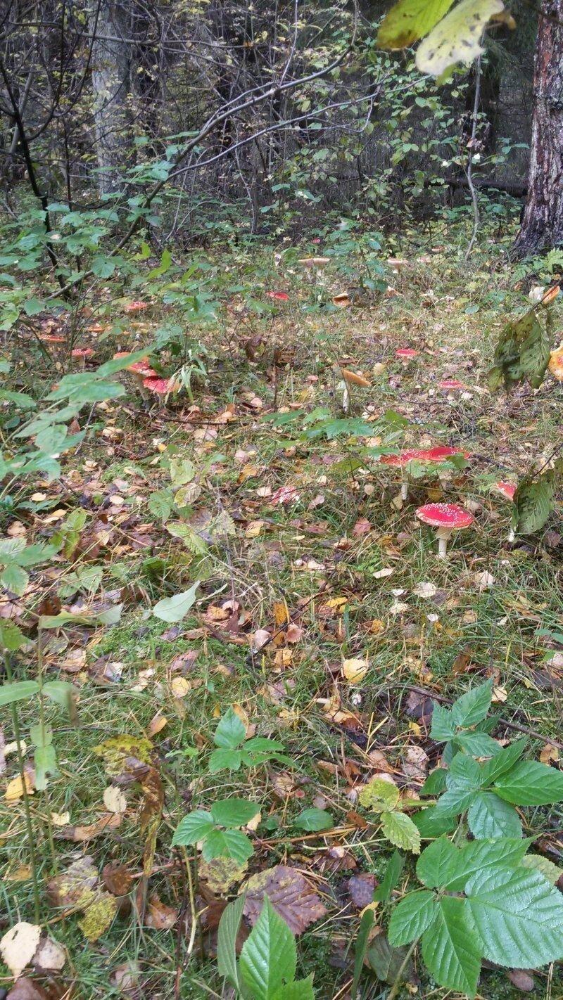 Лес и грибы
