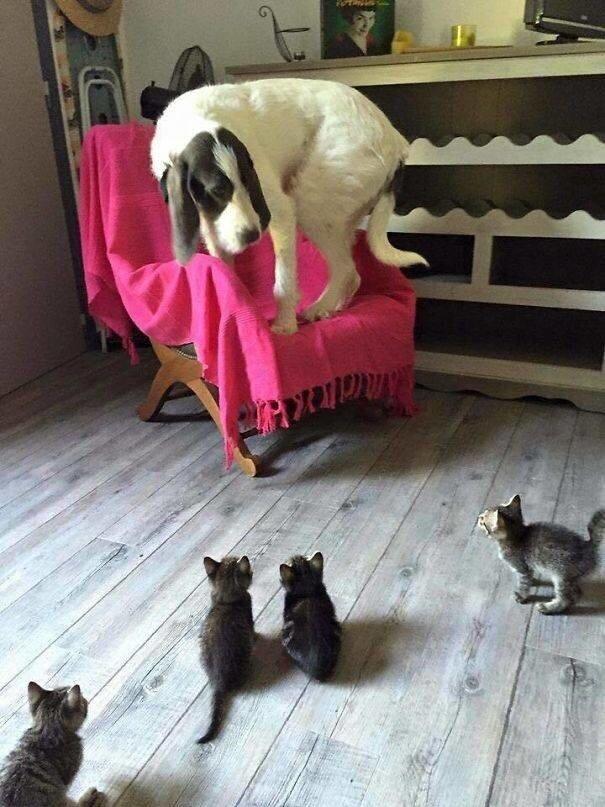Прикольная подборка фото про трусливых Собак