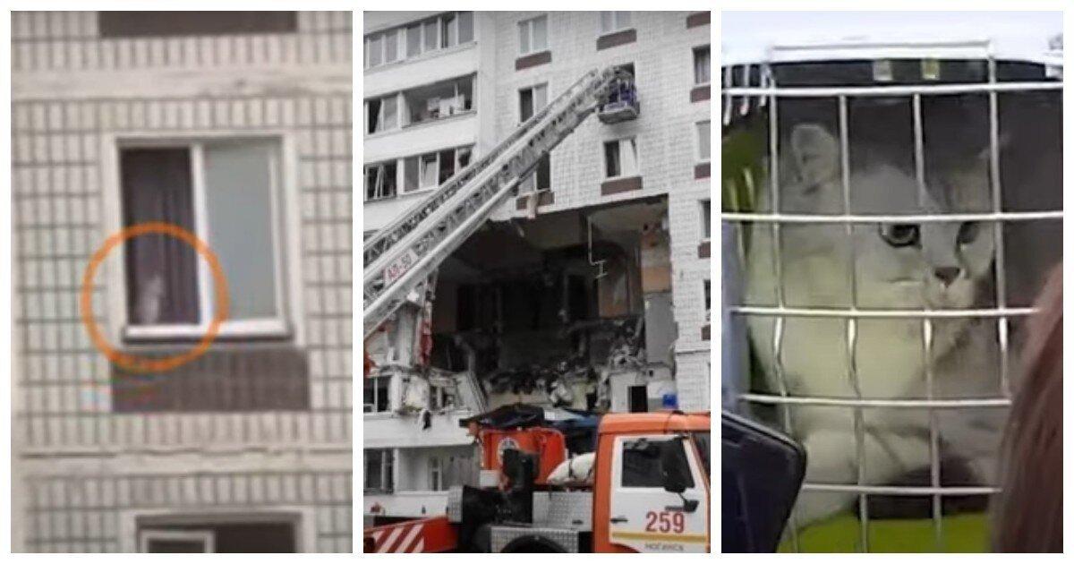 Изпострадавшего от взрыва дома вНогинске удалось спасти последнего кота