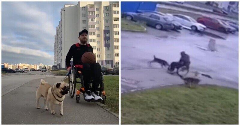 Мужчина в инвалидной коляске защитил своего мопса от стаи бродячих собак