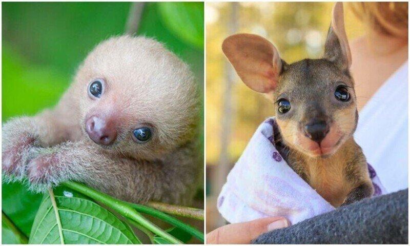 Порция милоты: очаровательные фото детёнышей животных