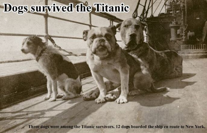 Dogs Survived The Titanic