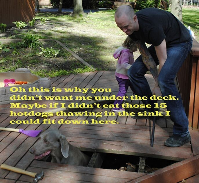 Dog Stuck Under Deck