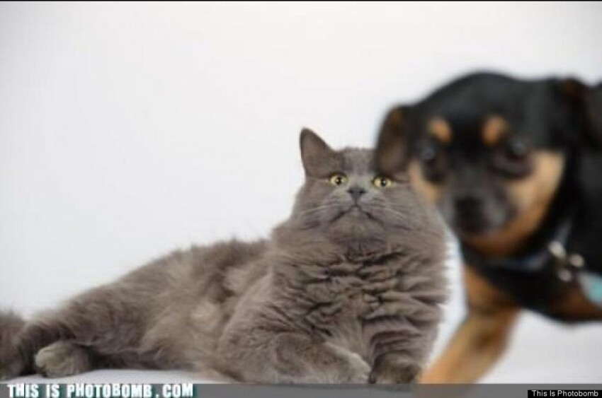 Dog photobombs cat
