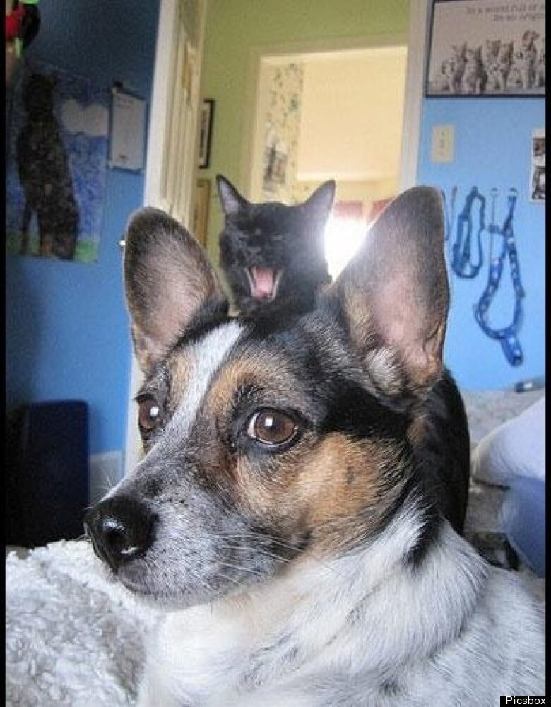 Kitty Photobombs Dog