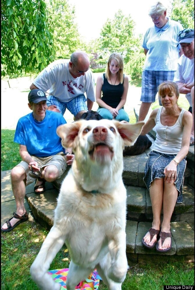 Dog wants to be in family photo
