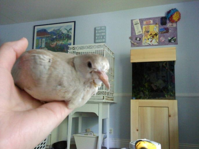 Day 30 The Full Grown Dove