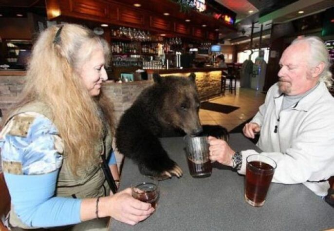 Bear having a beer