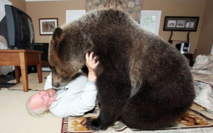Play Wrestling with the bear