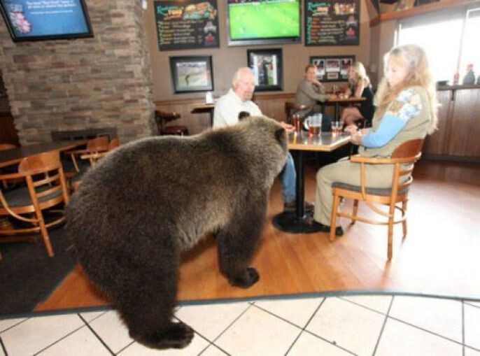 Bear at the restaurant