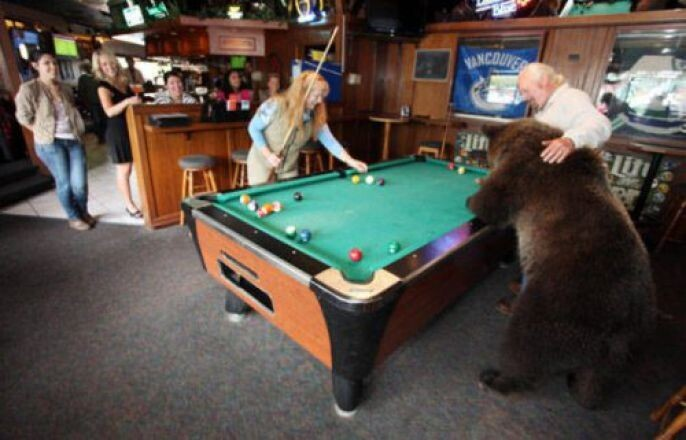 Bear playing pool at the bar