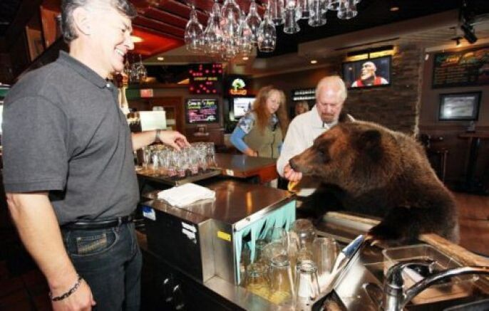 Taking the bear to the bar