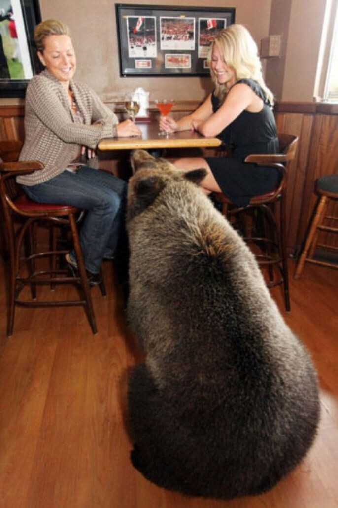 Bear Meeting some local ladies
