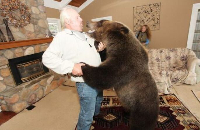 Dancing with the bear