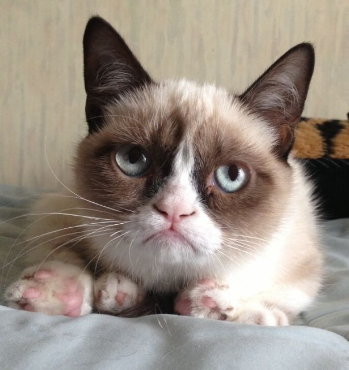 Grumpy Cat Not Impressed