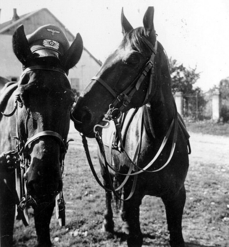 Horses Of World War I