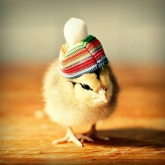 Funny Little Chick