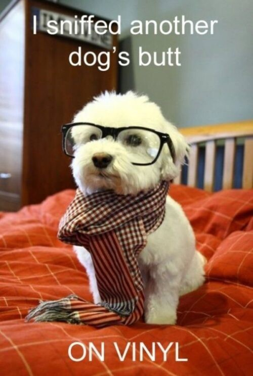 Because Dogs are way cuter and funnier than cats.