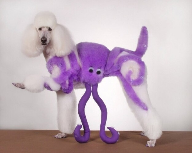 13 Poodles Who Know How To Party On Halloween