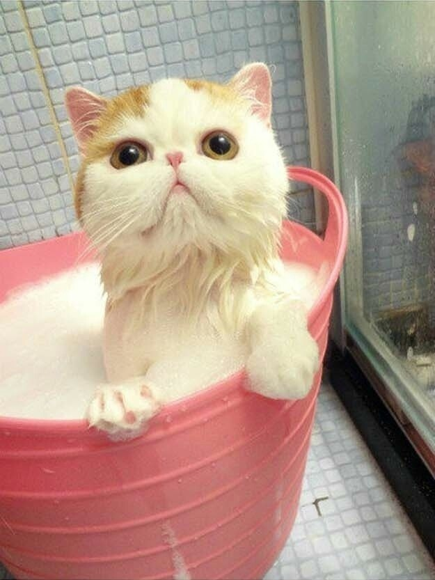 Adorable Bathtime Moments