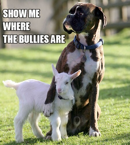 And this dog with a goat will fight for you as well.