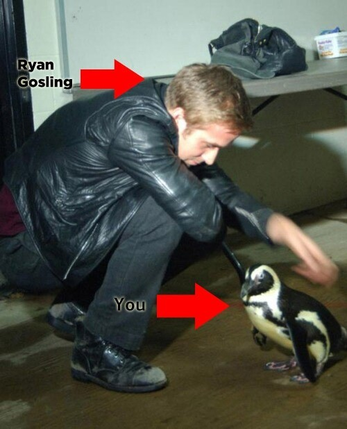 Imagine you are this penguin.