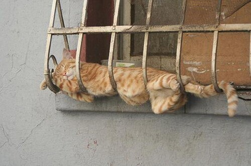 The Most Awkward Cat Sleeping Positions