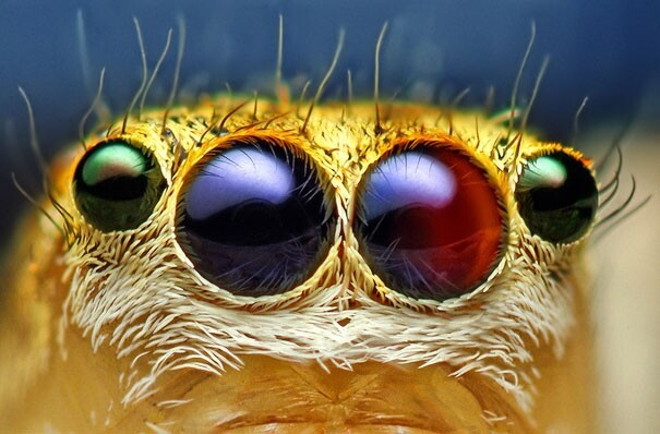 Macro photography: Eyes