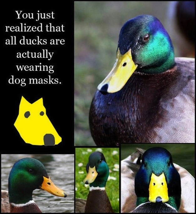Ducks are just dogs wearing masks.