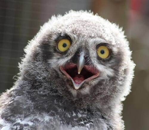 Cute Owls: The only reason you need to waste time on the web.
