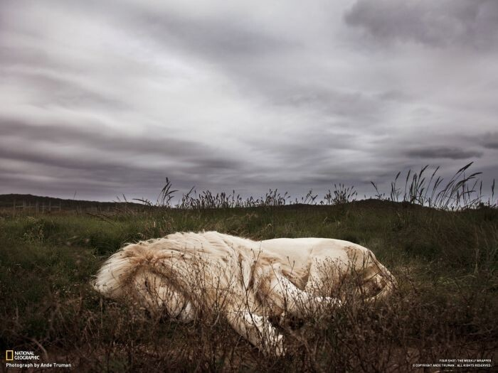 Best National Geographic Photos of November 2012