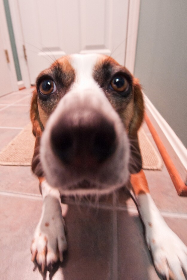 Animals Close-Up With A Wide-Angle Lens