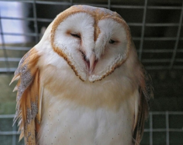 10 Owls Who Are Happy About Marijuana Legalization Passing