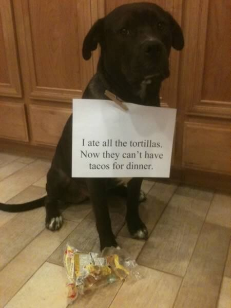 A Dogs Confession