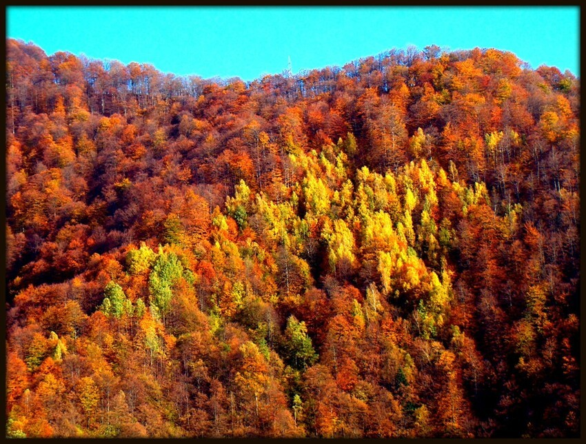 Beautiful Nature of the Fall Season