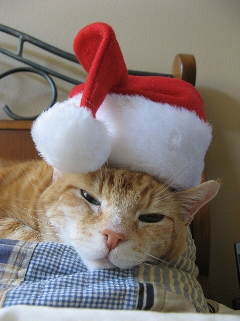 Cats Who Hate Christmas