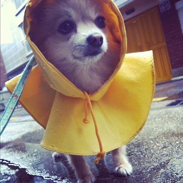 These Dogs Are Ready For Rain