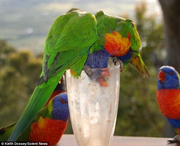 My Milkshakes Bring all the Birds to the Yard