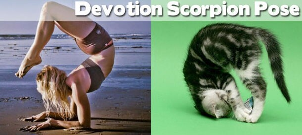 Yoga: Animals to Show You How It's Done!
