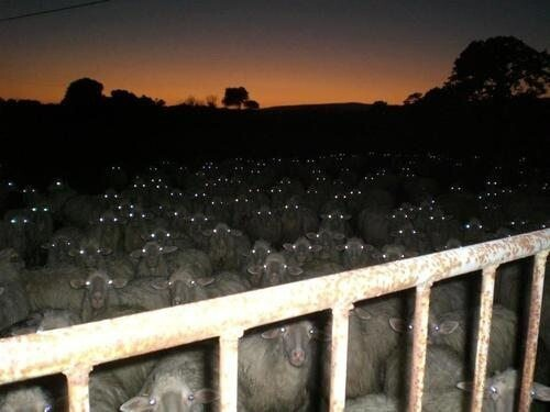 Goosebumps! Creepy photos from the interwebs