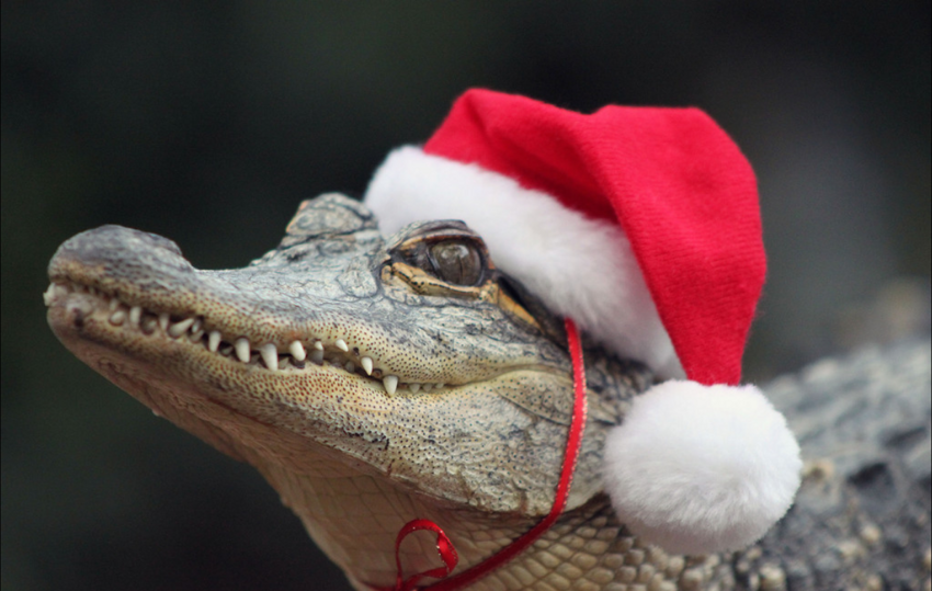 Santa Claus Got Slaughtered By a Gator