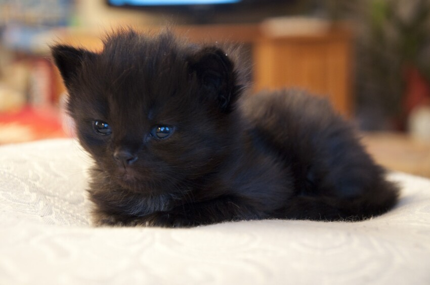 This Kitten So Black!