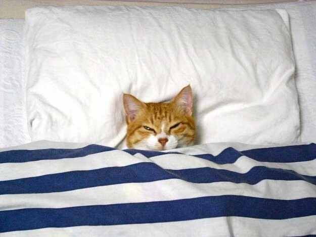 The 15 Best Things About Cat Bedtime