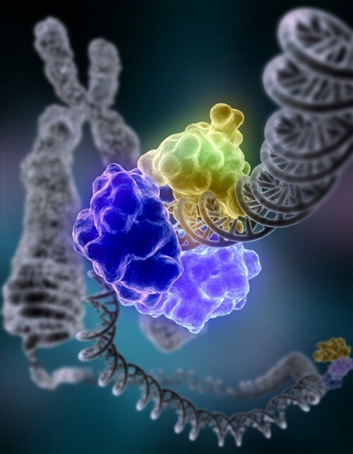 Weird 4 Stranded DNA Discovered In Human Cells!