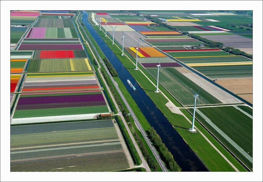 An Aerial Tour of Tulip Fields in the Netherlands