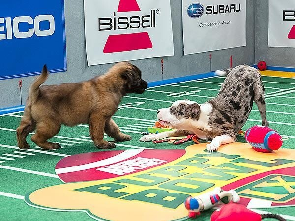Puppy Super Bowl  :)