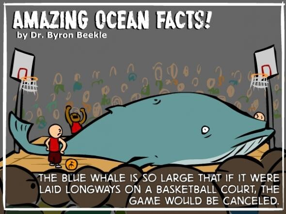Amazing Ocean Facts